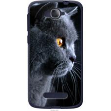 Чехол на Alcatel One Touch Pop C7 7041D Красивый кот (3038u-267)