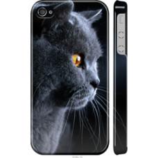 Чехол на iPhone 4 Красивый кот (3038c-15)