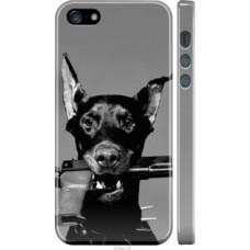 Чехол на iPhone 5s Доберман (2745c-21)
