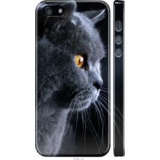 Чехол на iPhone 5s Красивый кот (3038c-21)