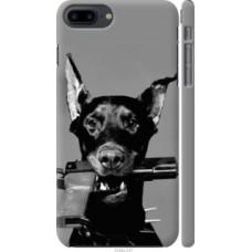 Чехол на iPhone 8 Plus Доберман (2745c-1032)