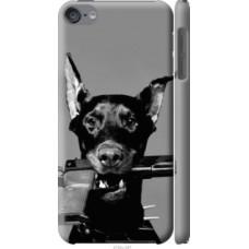 Чехол на iPod Touch 6 Доберман (2745c-387)