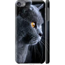 Чехол на iPod Touch 6 Красивый кот (3038c-387)