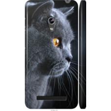 Чехол на Asus Zenfone 5 Красивый кот (3038c-81)
