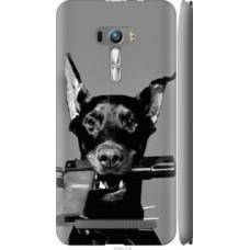 Чехол на Asus ZenFone Selfie ZD551KL Доберман (2745c-116)