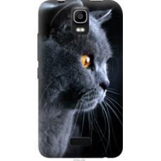 Чехол на Huawei Ascend Y3C Красивый кот (3038u-296)