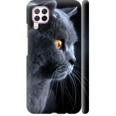 Чехол на Huawei Nova 6SE Красивый кот (3038c-1823)