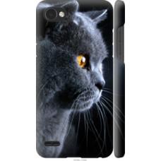 Чехол на LG Q6 Красивый кот (3038c-1094)