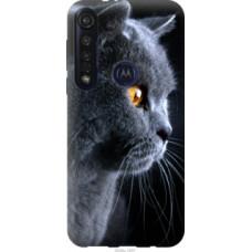 Чехол на Motorola G8 Plus Красивый кот (3038u-1837)