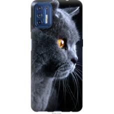 Чехол на Motorola G9 Plus Красивый кот (3038u-2104)