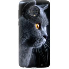 Чехол на Motorola Moto G6 Plus Красивый кот (3038u-976)