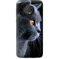 Чехол на Motorola Moto G6 Красивый кот (3038u-982)