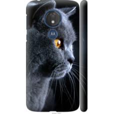 Чехол на Motorola Moto G7 Power Красивый кот (3038c-1657)
