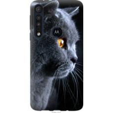 Чехол на Motorola One Macro Красивый кот (3038u-1812)