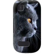 Чехол на Nokia Asha 200 Красивый кот (3038u-247)