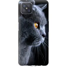 Чехол на Oppo Reno 4 Z Красивый кот (3038u-2278)