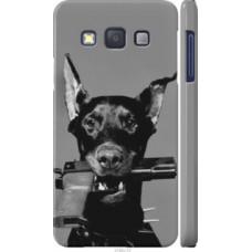 Чехол на Samsung Galaxy A3 A300H Доберман (2745c-72)