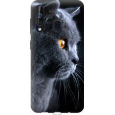 Чехол на Samsung Galaxy A60 2019 A606F Красивый кот (3038u-1699)