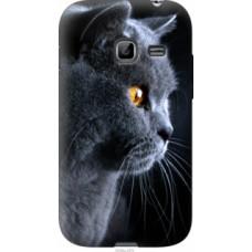 Чехол на Samsung Galaxy Ace Duos S6802 Красивый кот (3038u-253)
