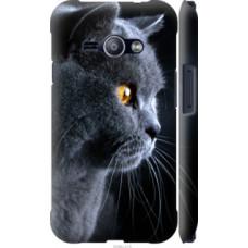 Чехол на Samsung Galaxy J1 Ace J110H Красивый кот (3038c-215)