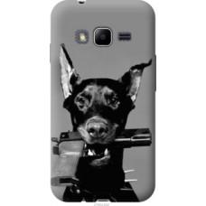 Чехол на Samsung Galaxy J1 Mini Prime J106 Доберман (2745u-632)