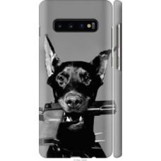 Чехол на Samsung Galaxy S10 Plus Доберман (2745c-1649)