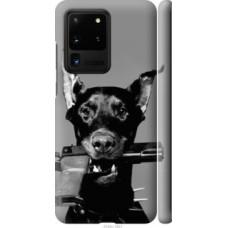 Чехол на Samsung Galaxy S20 Ultra Доберман (2745c-1831)