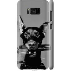 Чехол на Galaxy S8 Plus Доберман (2745c-817)