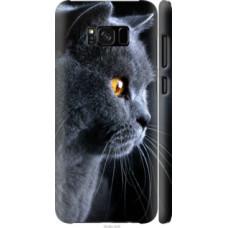 Чехол на Samsung Galaxy S8 Красивый кот (3038c-829)
