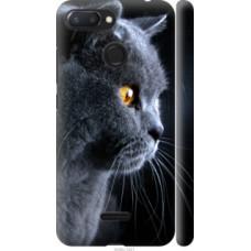 Чехол на Xiaomi Redmi 6 Красивый кот (3038c-1521)